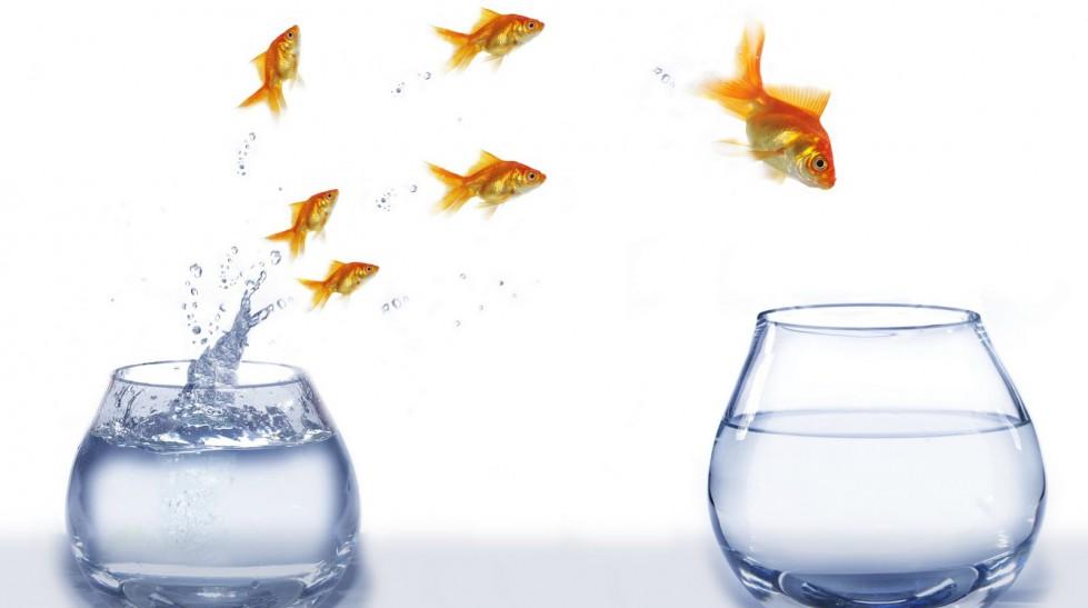 seguidores-lider-confianza